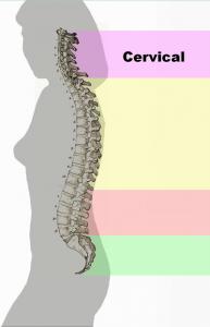 Spinal_column1